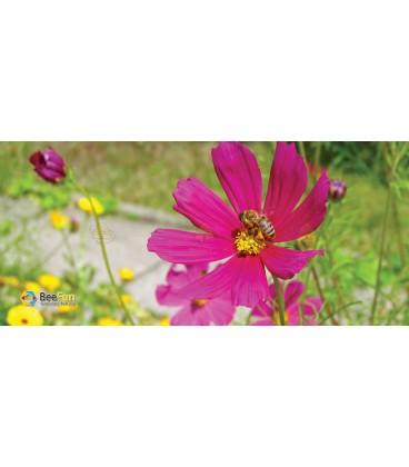 Mok/beker roze bloem met bij