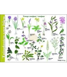 Tuinplanten voor bijen 'zoekkaart' A4