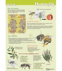 Help de honingbij, A4 kaart