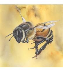 Ansichtkaart groot honingbij geel