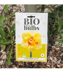Narcis Tahiti 5 stuks (bloembollen, bio)
