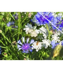 Tübinger biologisch bloemenmengsel