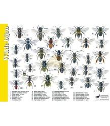 Wilde bijen 'zoekkaart' A4