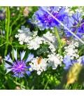 Bloemzaden en bloembollen van drachtplanten